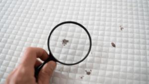 איש בודק עם זכוכית מגדלת איך מנקים מזרון מכתמים